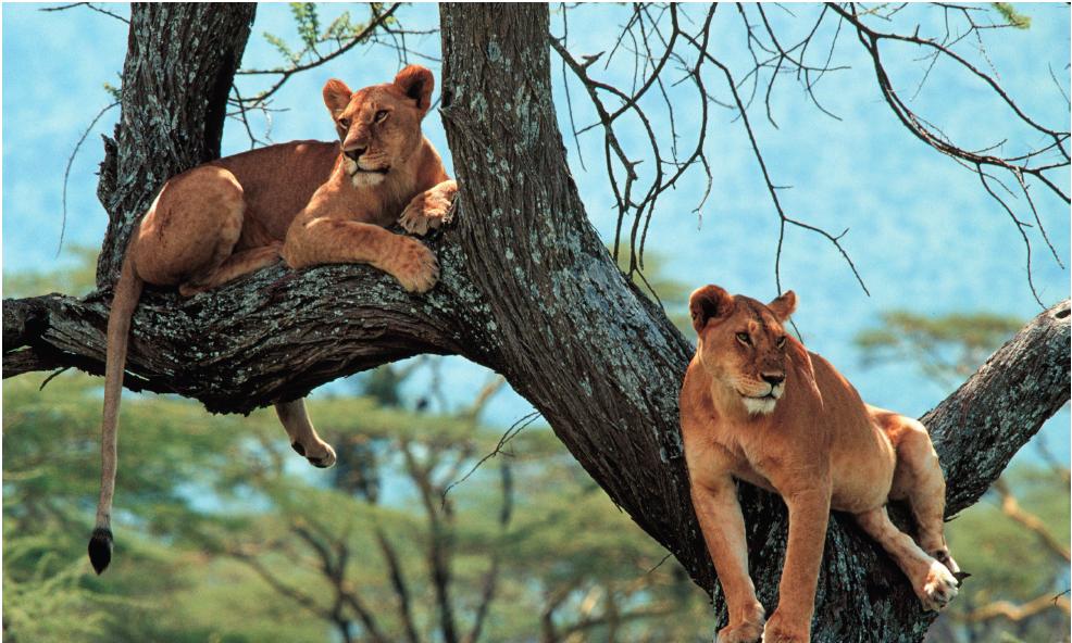 Study Environmental Psychology in Tanzania